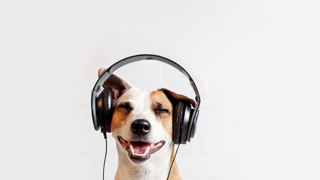 dog with headphones on